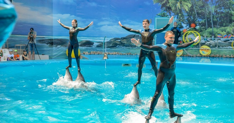 Достопримечательности Феодосии: Феодосийский дельфинарий «Немо»