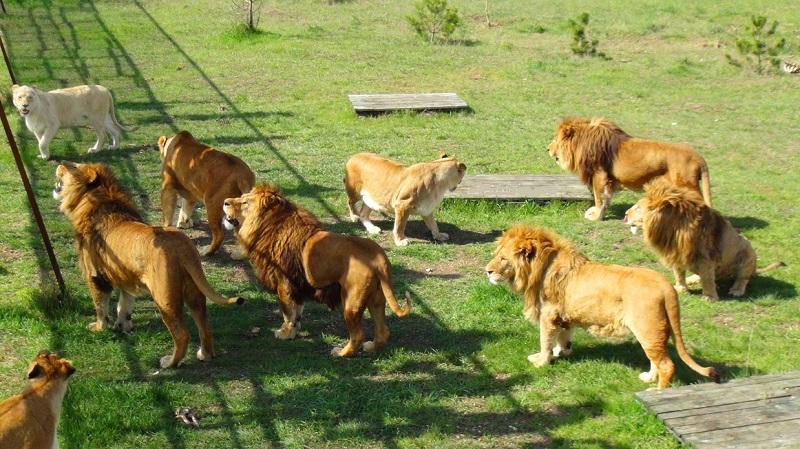 Достопримечательности Феодосии: Парк Тайган
